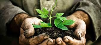 hands holding soil with small plant growing