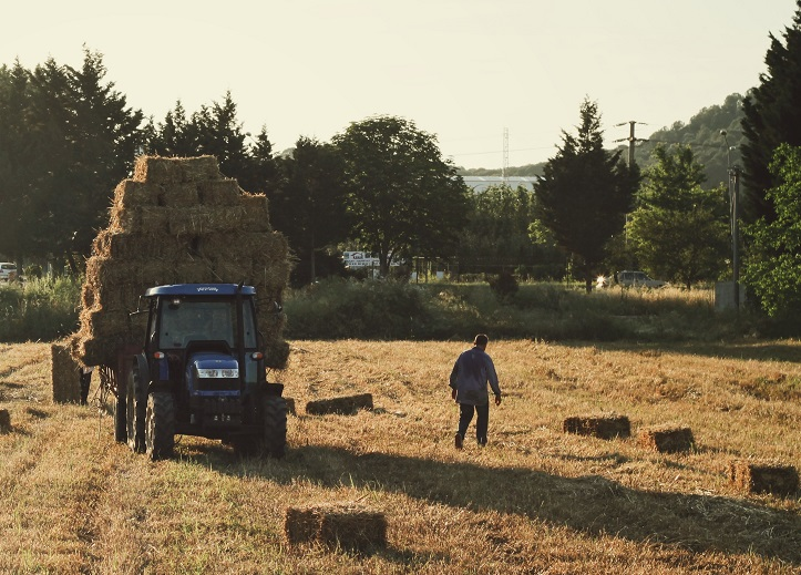 A farmer gathers hay on a tractor in a field